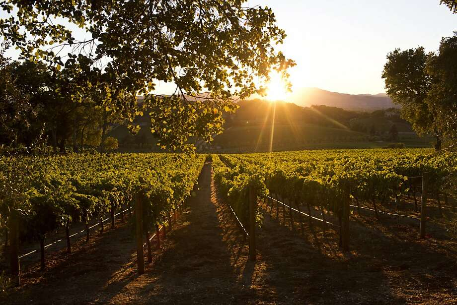 Longtime winemaker Tom Farella's vineyard is in the region southeast of Napa now known by the recently designated sub-appellation of Coombsville. Photo: Jason Henry, Special To The Chronicle