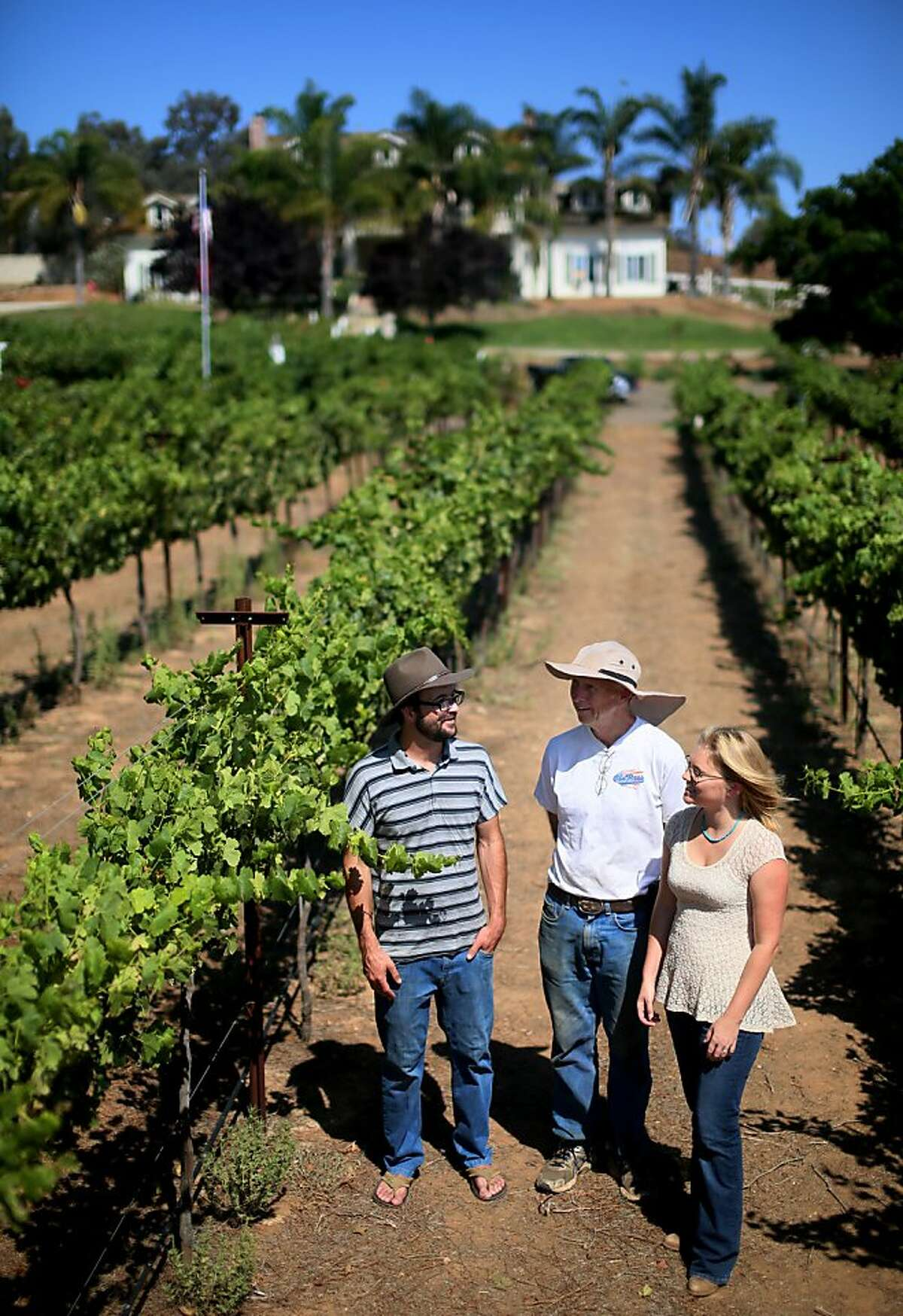 Alysha Stehly,R, Rich McClellan,Middle, and Chris Broomwell look over grapes in a vinyard at Highland Hills Vinyard in Ramona, CA on Friday, August 16, 2013. Chris and Alysha (husband and wife) both come from old SD farming families, and now make wine together, with some combination of their own label and work done for the vineyards that Alysha's father installs.(Photo by Sandy Huffaker for The SF Chronicle)