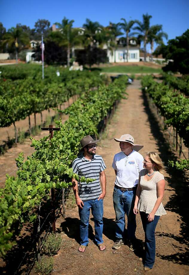 Chris Broomell (left), Rich McClellan and Alysha Stehly look over grapes at Highland Hills vineyard in the desert near San Diego. Photo: Sandy Huffaker, Sandy Huffaker/SF Chronicle