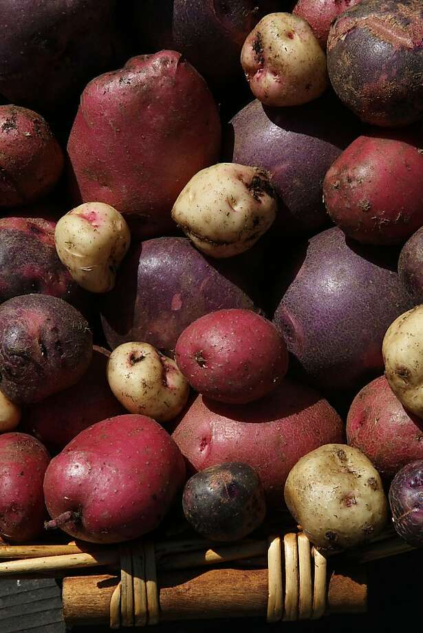 Purple Viking, Cherry Red and Warba potatoes harvested from The Chronicle's garden were easy to grow using the Potato Bag. Photo: Liz Hafalia, The Chronicle