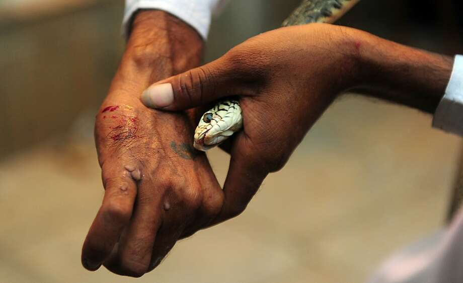 Charm doesn't always workon snakes, as evidenced by the hand of an Indian snake charmer outside a temple in Allahbad. Photo: Sanjay Kanojia, AFP/Getty Images