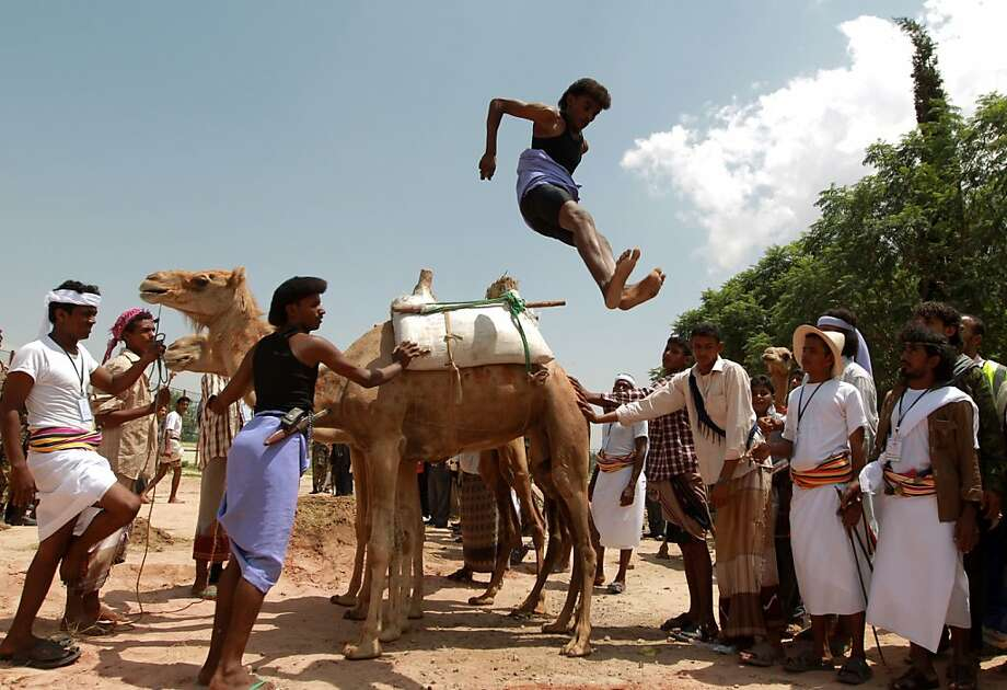 Hump jumper:Just as the ceremonial first pitch opens a ball game, the vaulting of the camels traditionally opens the Sanaa Summer Festival in Sanaa, the capital of Yemen. Photo: Mohammed Huwais, AFP/Getty Images