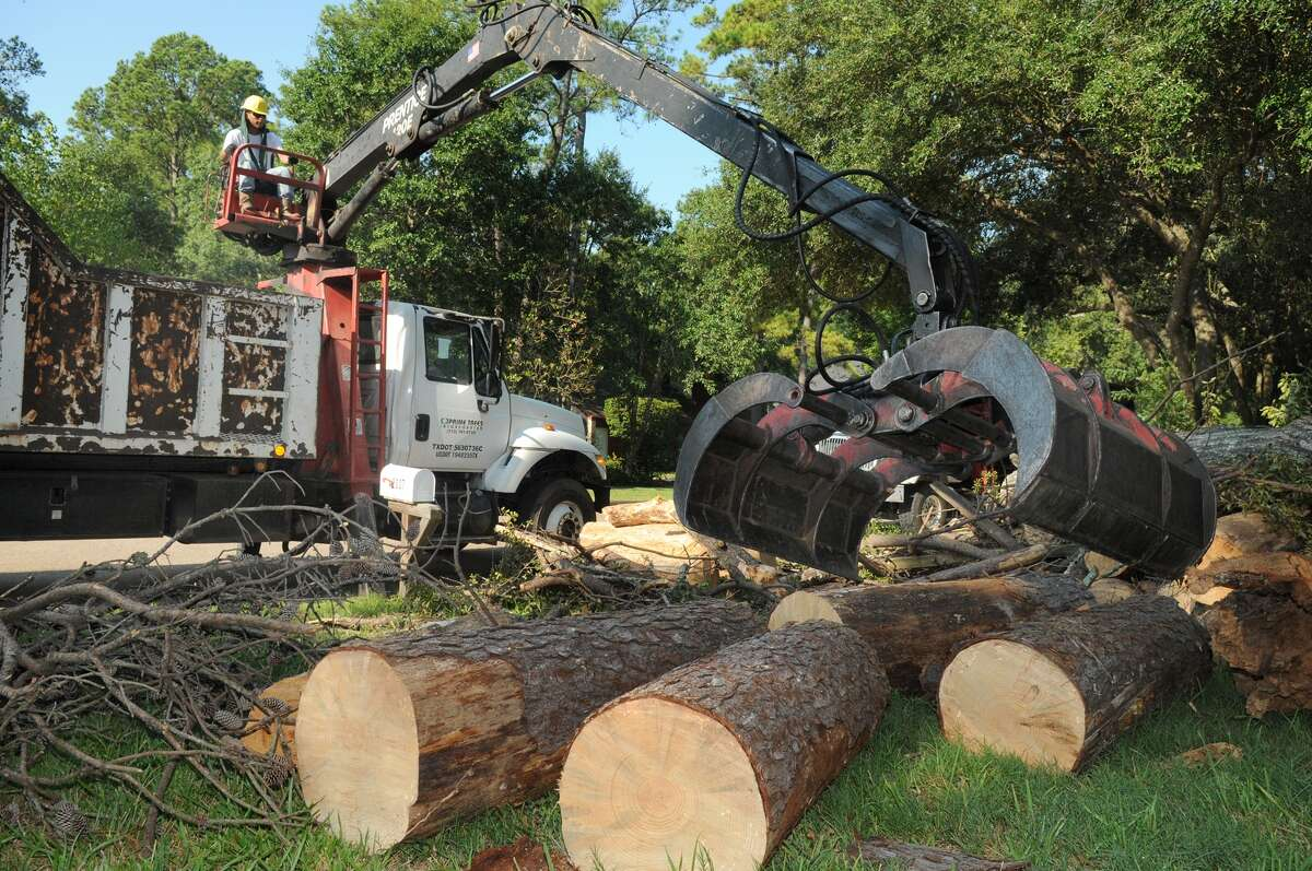 Miguel Agapito of Prime Trees Inc. clears the remains of the trees from a residence in Trailwood Village in Kingwood. The dead trees were considered a hazard to schoolchildren.