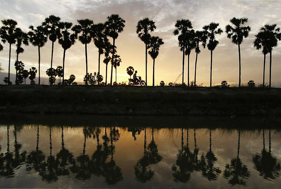 A Cambodian man drives his motorbike past palm trees at Krang Tnung village on the outskirt of Phnom Penh, Cambodia, early Wednesday, Aug. 21, 2013. (AP Photo/Heng Sinith) Photo: Heng Sinith, Associated Press