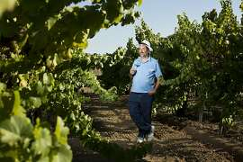 Peter Fanucchi, of Fanucchi Vineyards, poses with his Trousseau Gris vines in Fulton, Calif., Wednesday, August 14, 2013.