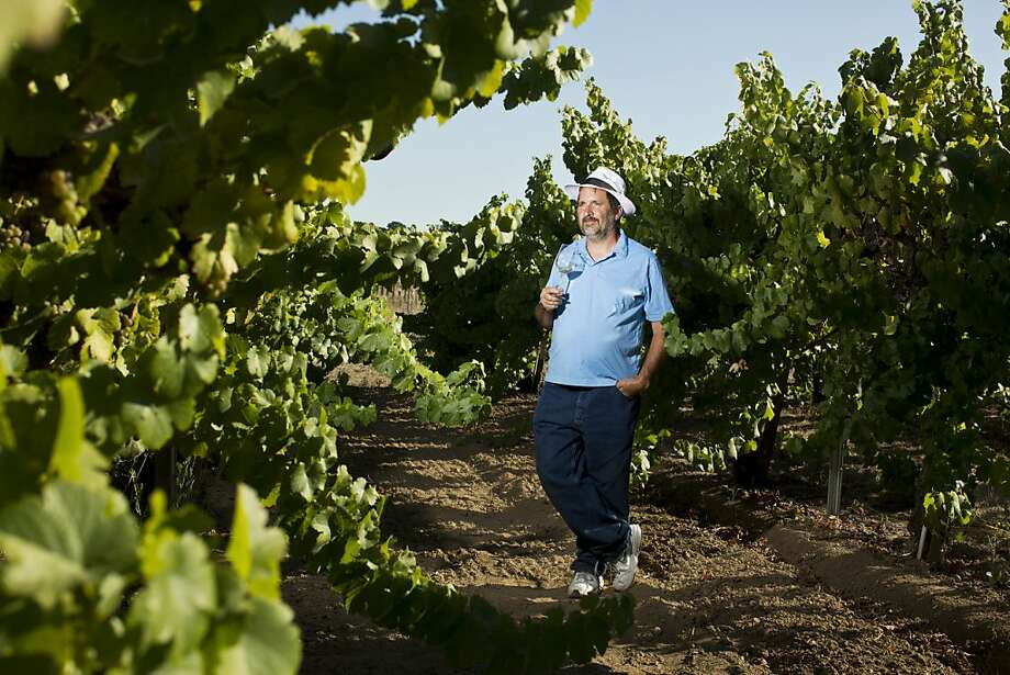 Peter Fanucchi of Fanucchi Vineyards grows his Trousseau Gris vines in Fulton, near Santa Rosa. Photo: Jason Henry, Special To The Chronicle