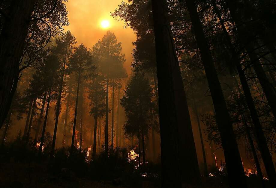 BUCK MEADOWS, CA - AUGUST 21:  Fire consumes trees along US highway 120 as the Rim Fire burns out of control on August 21, 2013 in Buck Meadows, California. The Rim Fire continues to burn out of control and threatens 2,500 homes outside of Yosemite National Park. Over 400 firefighters are battling the blaze that is only 5 percent contained.  (Photo by Justin Sullivan/Getty Images) Photo: Justin Sullivan, Getty Images