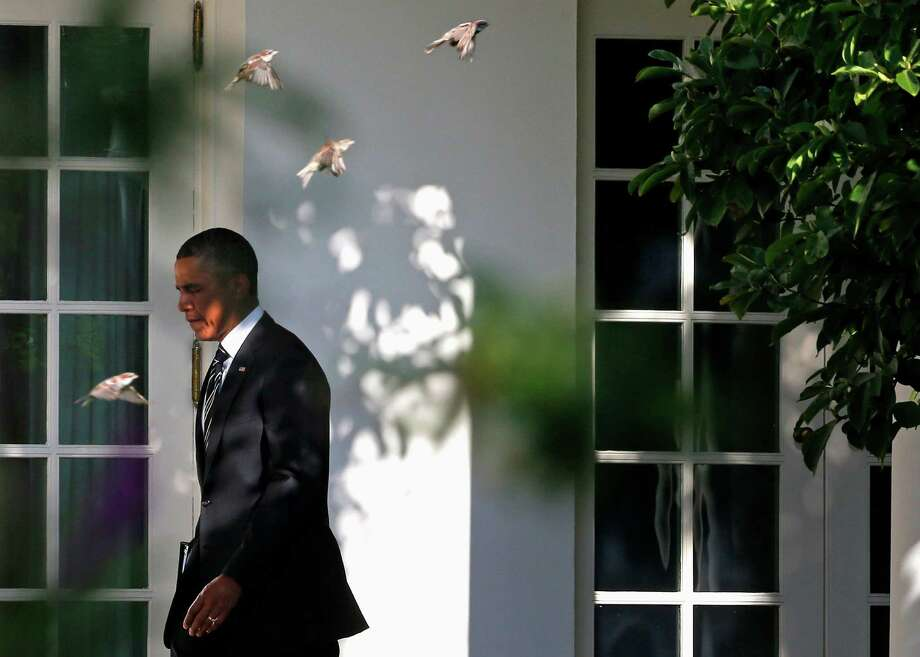 Birds fly past President Barack Obama as he walks along the West Wing colonnade of the White House in Washington, Thursday, Aug. 22, 2013, before traveling to New York and Pennsylvania. President Barack Obama on Thursday will unveil a sweeping new plan for rating colleges based in part on affordability, with the goal of eventually linking those ratings to federal financial aid awards. (AP Photo/Charles Dharapak) ORG XMIT: WHCD103 Photo: Charles Dharapak, AP / AP