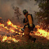 A firefighter from Ebbetts Pass Fire District uses a drip torch to light a back fire while battling the Rim Fire on August 21, 2013 in Groveland, California. The Rim Fire continues to burn out of control and threatens 2,500 homes outside of Yosemite National Park. Over 400 firefighters are battling the blaze that is only 5 percent contained.