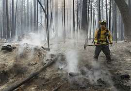 A firefighter uses a handtool to extinguish a hot spot from the Rim Fire near Camp Mather on Friday, Aug. 23, 2013. Burning near Yosemite National Park, the wildfire has scorched over 150 square miles of terrain.