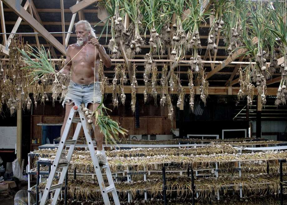 Pennsylvania: Steve Guthrie hangs garlic in a barn on the grounds of Enon Valley Garlic, in Darlington Township, Pa.. Ron Stidmon sells more than 20 varieties of garlic and grows about 40 on the Darlington Township farm he purchased with his wife, Rosemary, in 2003. Photo: Kevin Lorenzi, Associated Press