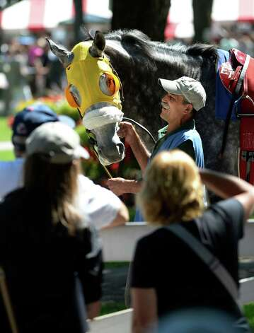 Ballerino takes a look at the racing patrons Friday afternoon, Aug 23, 2013, at Saratoga Race Course in Saratoga Springs, N.Y. (Skip Dickstein/Times Union) Photo: SKIP DICKSTEIN