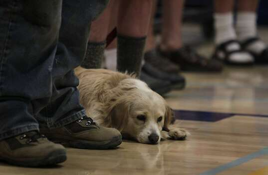 A dog named Regan joins other locals to hear updates from firefighters on the Rim Fire in Groveland, Calif. on Friday, Aug. 23, 2013. Photo: Paul Chinn, The Chronicle