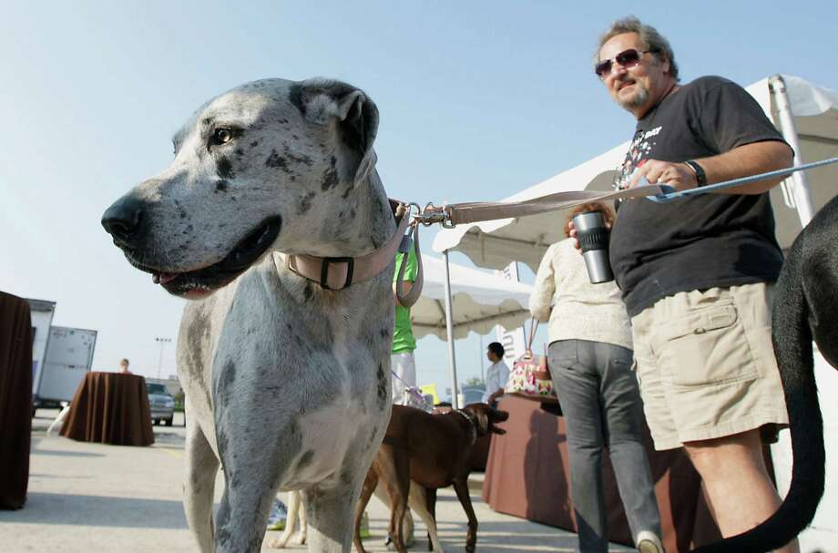 "Jack McKaye, right, holds his great dane named ""Lulu"" during the Unleashed by Petco Annual Summer Snow Day for Dogs. Photo: James Nielsen, Houston Chronicle / © 2013  Houston Chronicle"