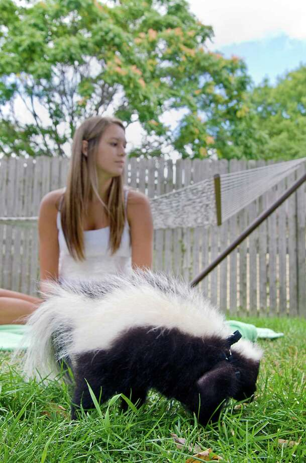 This Aug. 14, 2013 photo shows Keili Woodruff, 16, of Bay City and her pet skunk, King Leon in Bay City, Mich. She owns two parrots and a cat, but 16-year-old Keili Woodruff of Bay City has another pet that causes people to do double takes: a baby skunk. (AP Photo/The Bay City Times, Danielle McGrew) Photo: AP