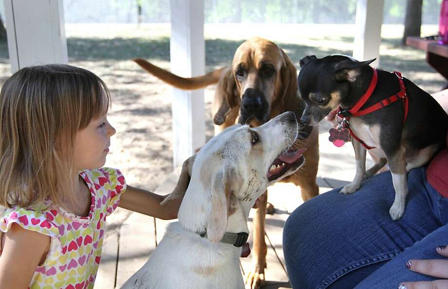 Bite you I will if closer you come:Sophie Russell's dog Daisy invades the personal space 
