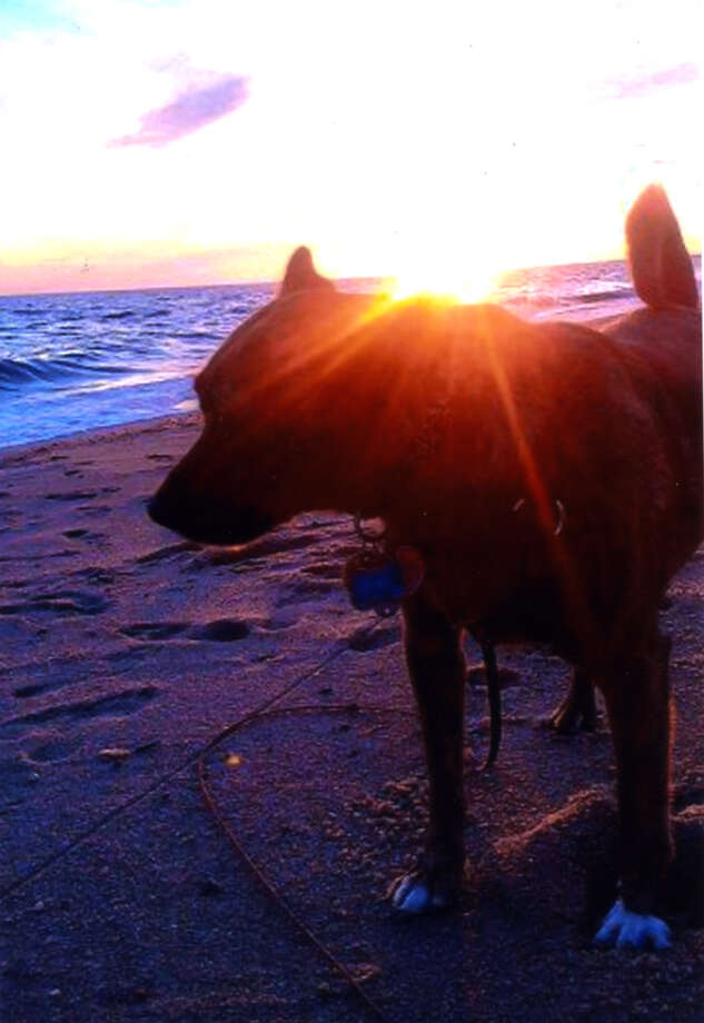 Joanne Malpass of Troy, N.Y., took this photo of her dog Moe at Cape Cod, Mass., in the sunset in June. (Joanne Malpass)