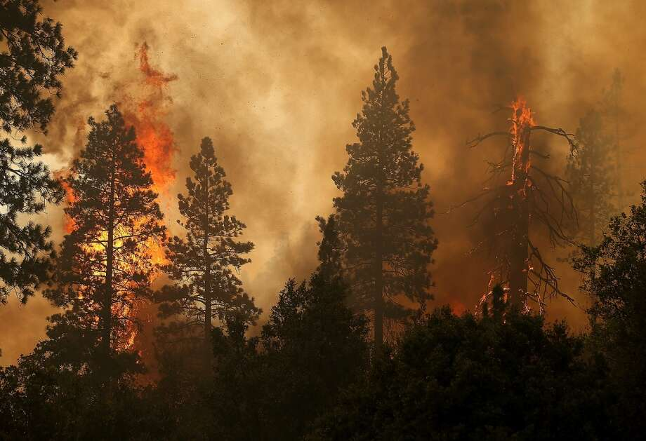 The Rim Fire consumes trees on August 24, 2013 near Groveland, California. The Rim Fire continues to burn out of control and threatens 4,500 homes outside of Yosemite National Park. Photo: Justin Sullivan, Getty Images