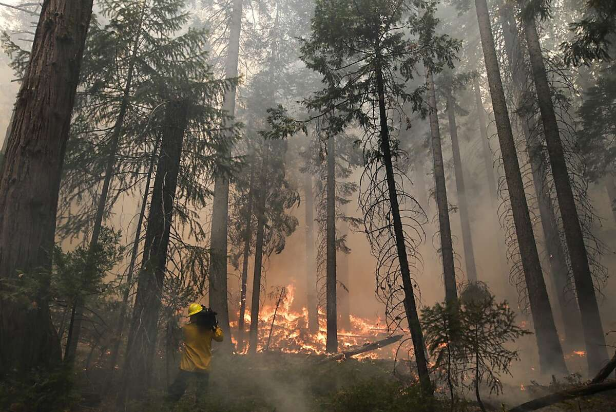 A videographer records the Rim Fire burning through trees near Yosemite National Park, Calif., on Tuesday, Aug. 27, 2013. Firefighters gained some ground Tuesday against the huge wildfire burning forest lands in the western Sierra Nevada, including parts of Yosemite National Park. (AP Photo/Jae C. Hong)