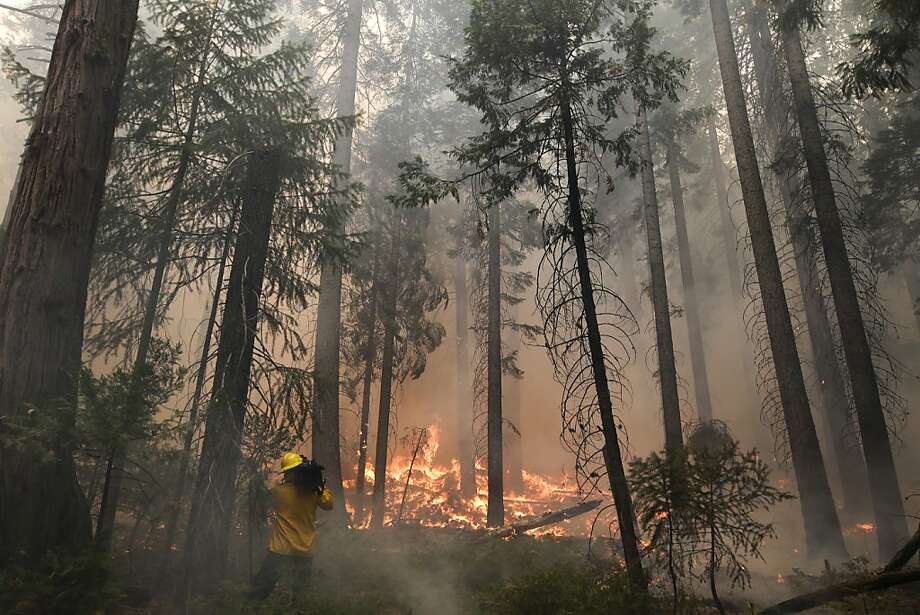 A videographer records the Rim Fire burning through trees near Yosemite National Park, Calif., on Tuesday, Aug. 27, 2013. Firefighters gained some ground Tuesday against the huge wildfire burning forest lands in the western Sierra Nevada, including parts of Yosemite National Park. Photo: Jae C. Hong, Associated Press