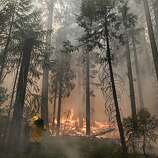 A videographer records the Rim Fire burning through trees near Yosemite National Park, Calif., on Tuesday, Aug. 27, 2013. Firefighters gained some ground Tuesday against the huge wildfire burning forest lands in the western Sierra Nevada, including parts of Yosemite National Park.