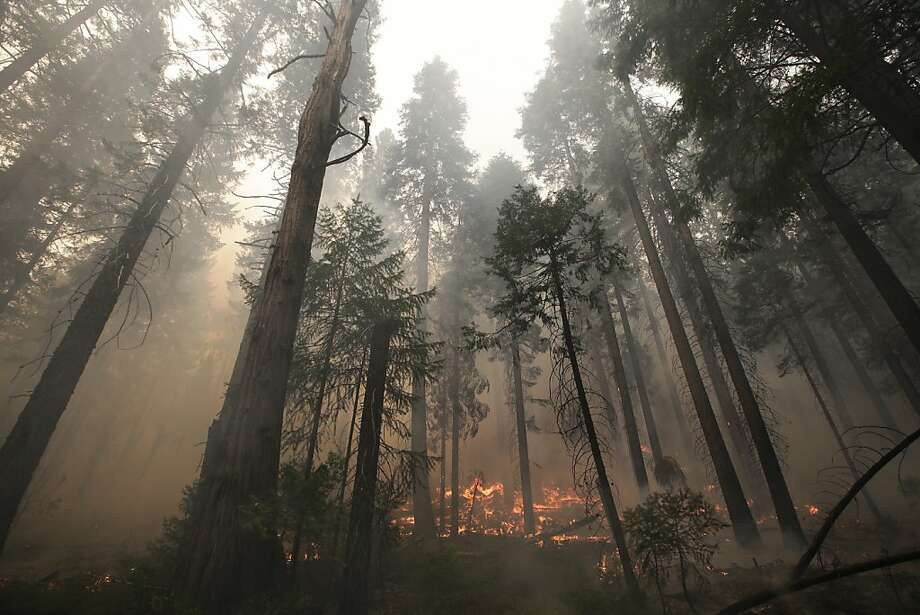 The Rim Fire burns near Yosemite National Park. At 284 square miles, it is the seventh-largest wildfire in California history. Photo: Jae C. Hong, Associated Press