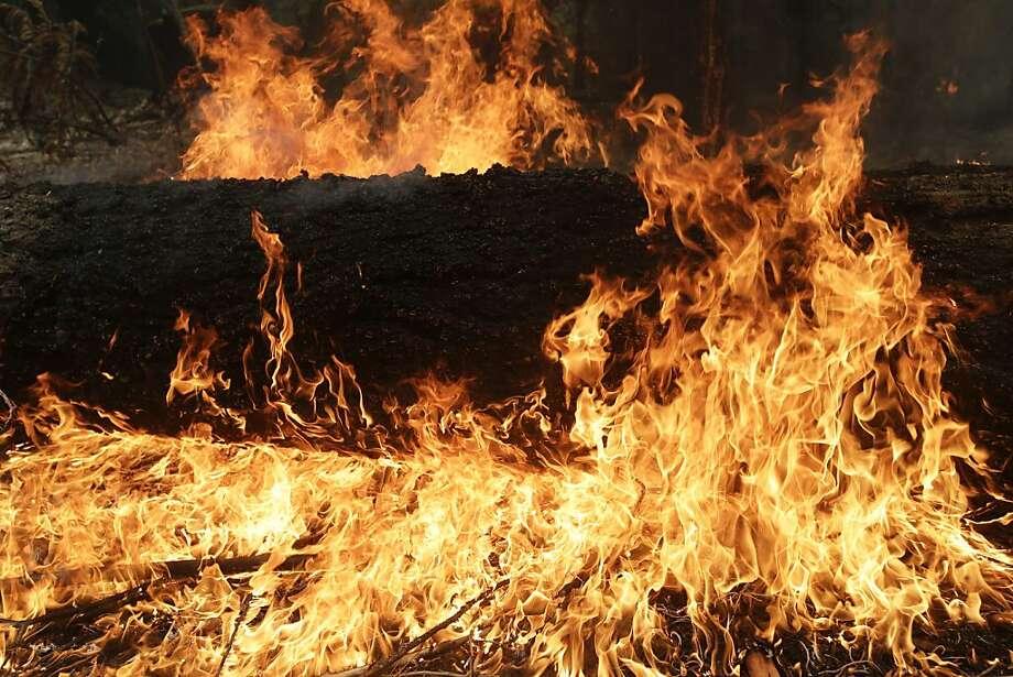 A tree burns near Yosemite as the Rim Fire rages. Photo: Jae C. Hong, Associated Press