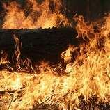 A tree burns near Yosemite as the Rim Fire rages.