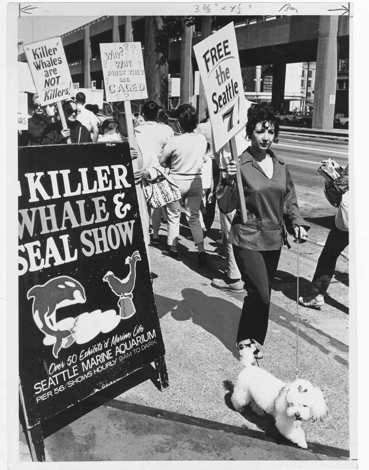 Demonstrators  picket the aquarium on Seattle's downtown waterfront in protest of capture and display of killer whales, 1970. Photo: Robert H. Miller/Copyright MOHAI, Seattle Post-Intelligencer Collection, 2000.107_print_WhalesAllSeattleArea_001 copy Photo: Robert H. Miller, Copyright MOHAI, Seattle Post-Intelligencer Collection / Copyright Museum of History & Industry
