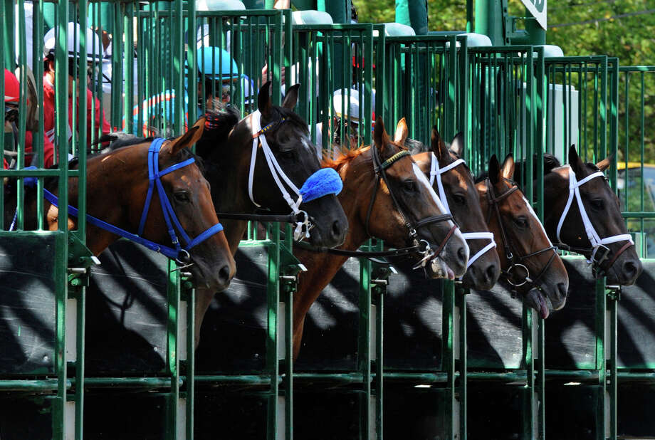 Horses break the gate in the third race on the card at Saratoga Race Course in Saratoga Springs Aug. 27, 2010.  (Skip Dickstein/Times Union) Photo: Skip Dickstein