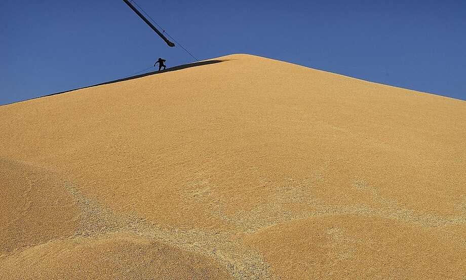 Whole (lot of) grain: Pulling a cable across a mountain of freshly harvested wheat at the Port of Lewiston, 