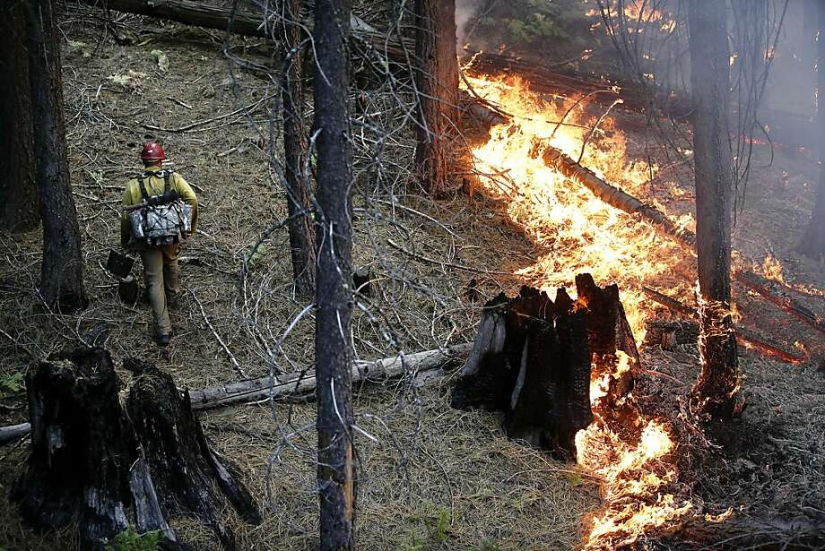 Firefighter Russell Mitchell, left, monitors a back burn during the Rim Fire near Yosemite National Park, Calif., on Tuesday, Aug. 27, 2013. Unnaturally long intervals between wildfires and years of drought primed the Sierra Nevada for the explosive conflagration chewing up the rugged landscape on the edge of Yosemite National Park, forestry experts say. The fire had ravaged 282 square miles by Tuesday, the biggest in the Sierra's recorded history and one of the largest on record in California. Photo: Jae C. Hong, Associated Press