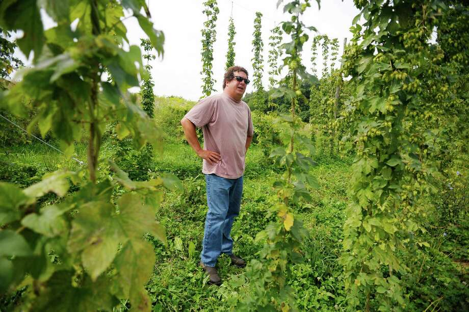 Dietrich Gehring stands by some of his hops plants at Indian Ladder Farms on Monday, Aug. 19, 2013 in Altamont, NY.     (Paul Buckowski / Times Union) Photo: Paul Buckowski / 00023491A