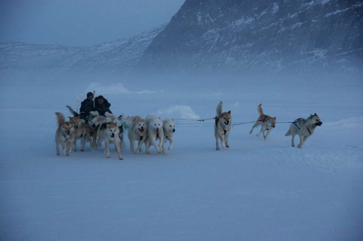 Dog sleds are used for travel in the Arctic region of Greenland, in a scene from