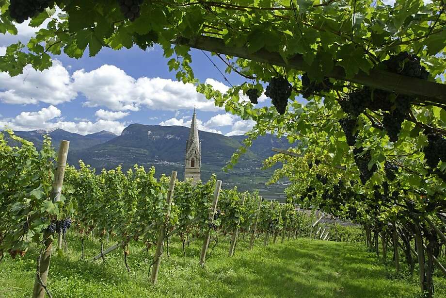Vineyards in Alto Adige grow high on alpine hillsides, and yield a diverse selection of grapes for red and white wines. Photo: Eos