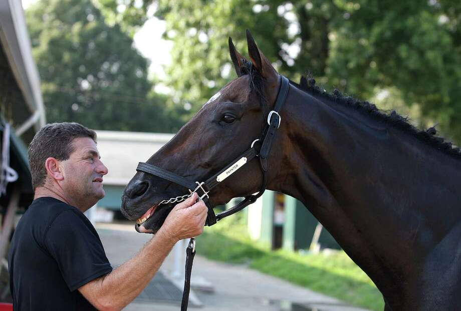 In a photo provided by Equi-Photo, assistant trainer Jim Barnes checks out Haskell Invitational contender Paynter, after the horse arrived from California on Thursday afternoon, July 26, 2012, at Monmouth Park in Oceanport, N.J. (AP Photo/Equi-Photo, Bill Denver)  ORG XMIT: MTP102 Photo: Bill Denver / Equi-Photo