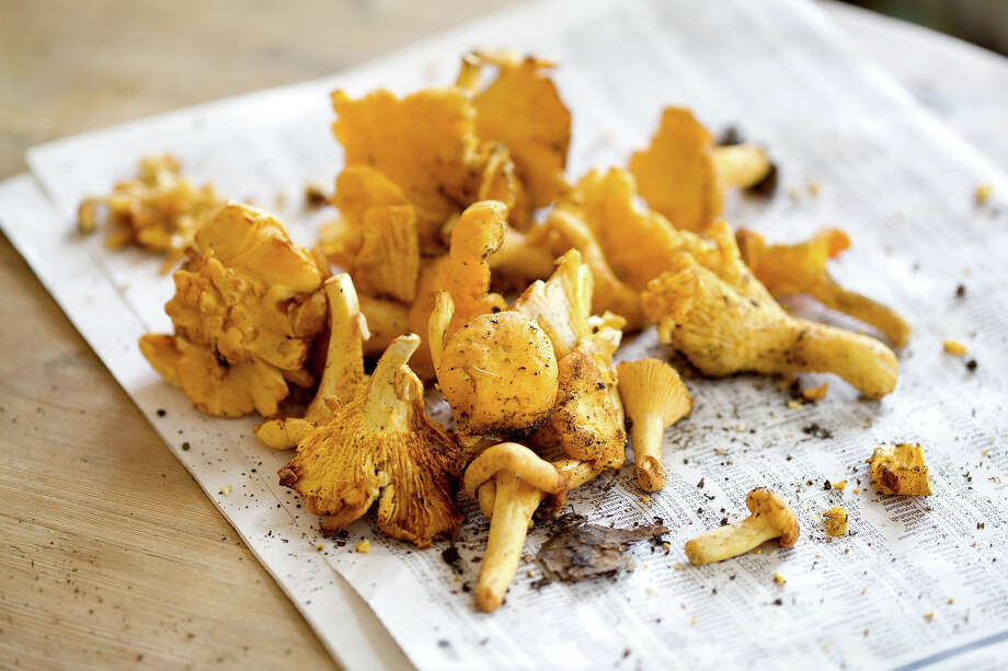 National Mushroom MonthYou can eat them and they can kill you. Respect. Photo: Bodil Johansson, Getty Images/Folio Images RM / Folio Images RM
