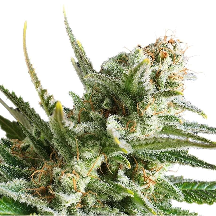 The Best Marijuana Strains for Depression