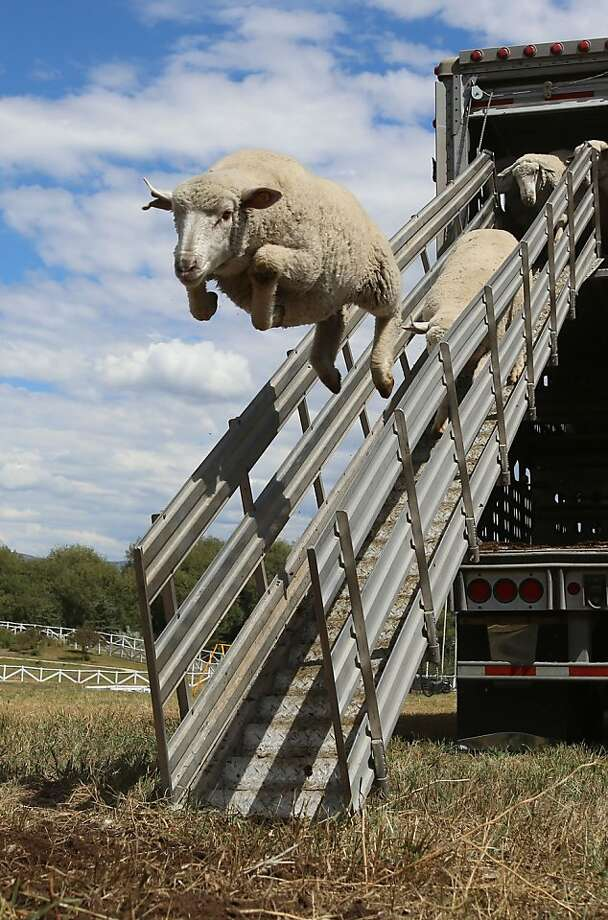 Please hold onto the railing and watch your step as you descend the ... or you could just 