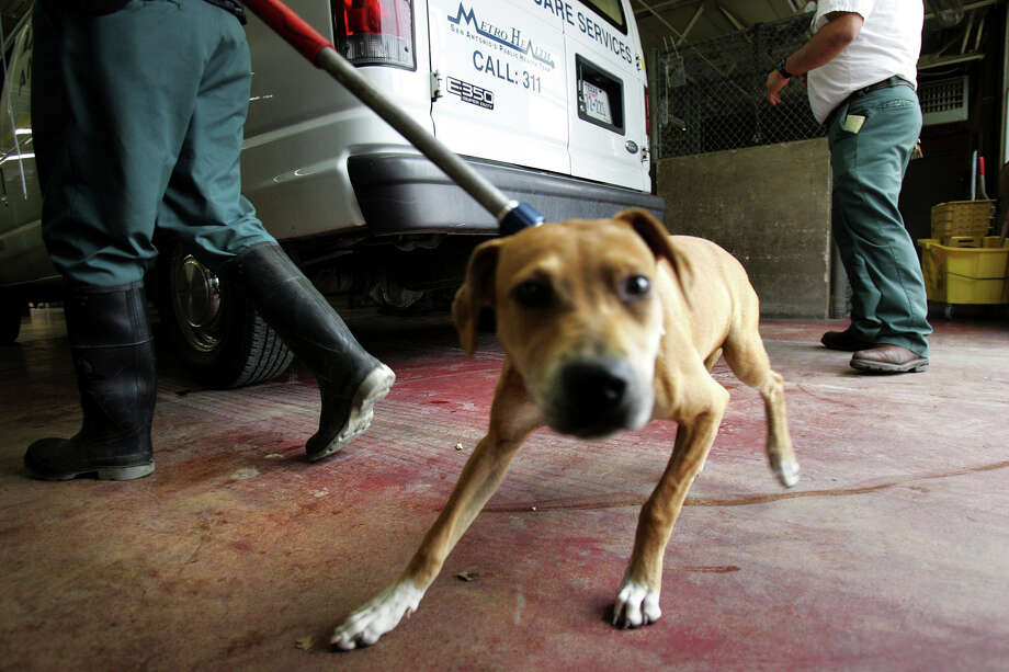 A  dog is unloaded from the The Animal Control truck after being picked up.  San Antonio has a roaming dog problem and a biting dog problem, but euthanizing more dogs is not the solution. Photo: Express-News File Photo / SAN ANTONIO EXPRESS-NEWS