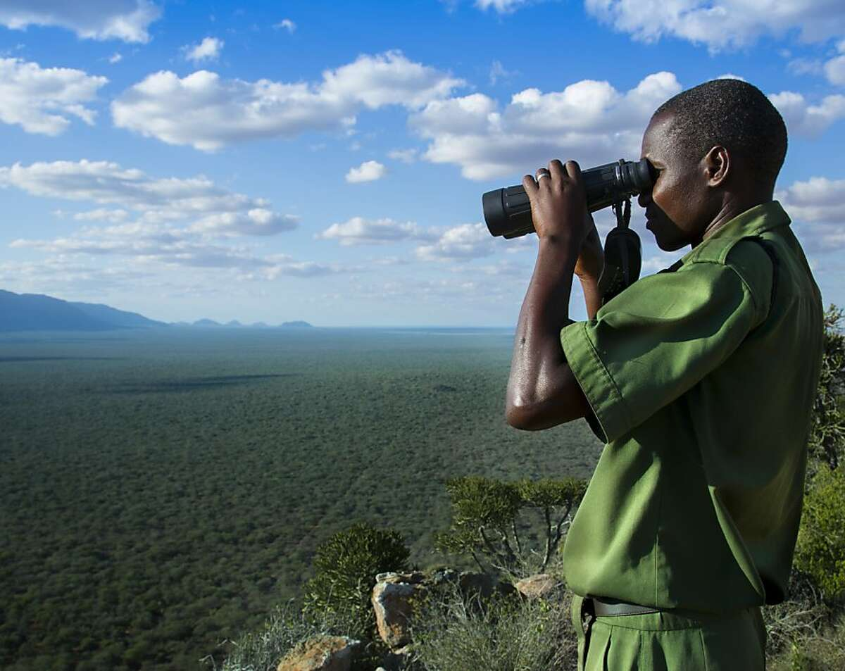 A Wildlife Works conservation ranger searches for poachers and charcoal burners in a Kenyan forest.