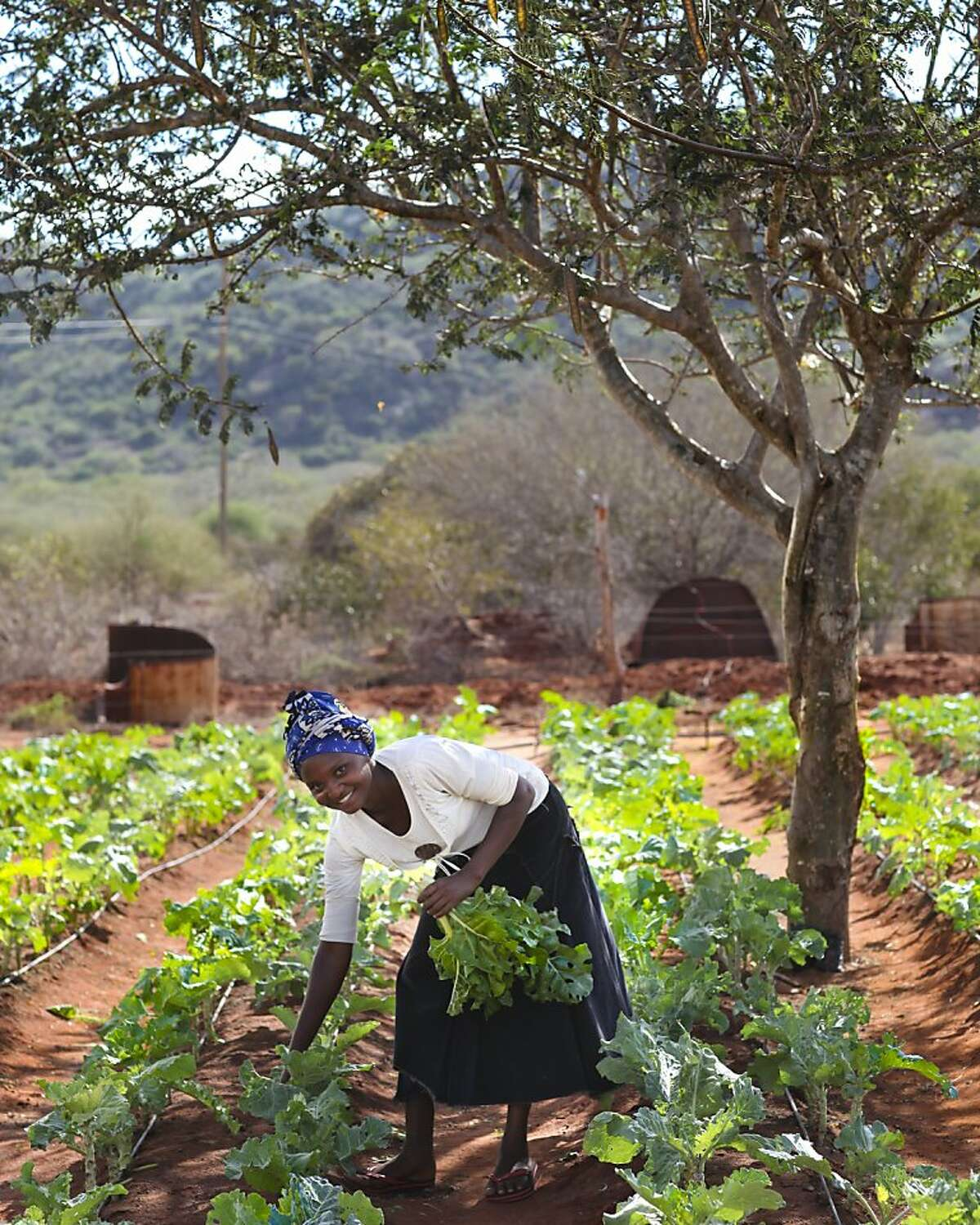Sustainable agriculture methods give farmers an alternative to clearing trees for better land.