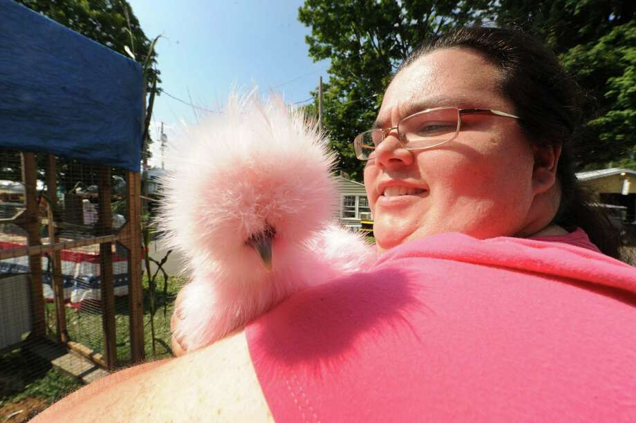 Peggy French of Canaan holds a stained pink Japanese silkie bantam chicken named Pinky Thursday afternoon, Aug. 29, 2013, at the Columbia County Fair in Chatham, N.Y. The chick was stained using beet juice.The fair runs Aug. 28-Sept. 2. (Michael P. Farrell/Times Union) Photo: Michael P. Farrell / 00023178A