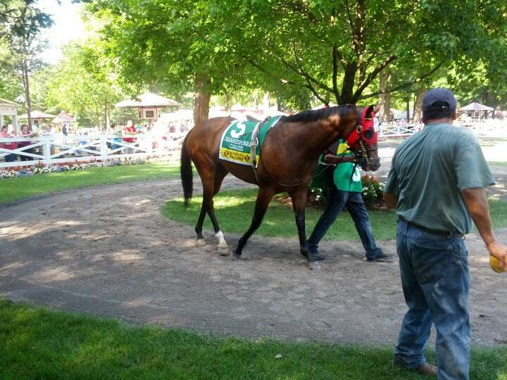 Horse prior to race in the paddock at the Saratoga Race Course. (Alan Richter)