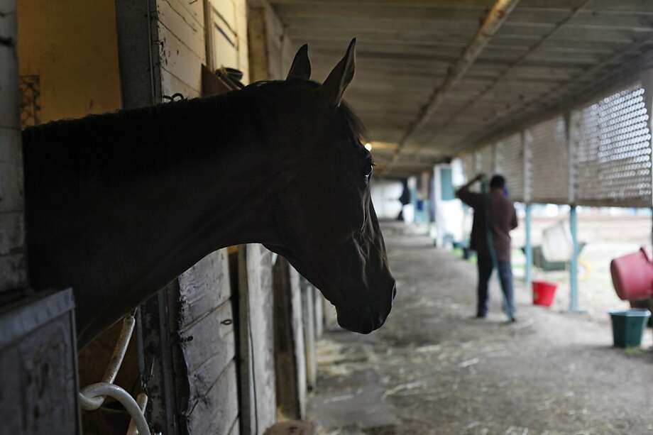 Mare Rising Above watches as horseman Juan Neria walks down the stables, Tuesday August 27,  2013, at the Golden Gate Fields in Berkeley, Calif. Rising Above has never won a race in her 70 career starts and trainer Frances Henderson believes that this Sunday she will win. Photo: Lacy Atkins, The Chronicle