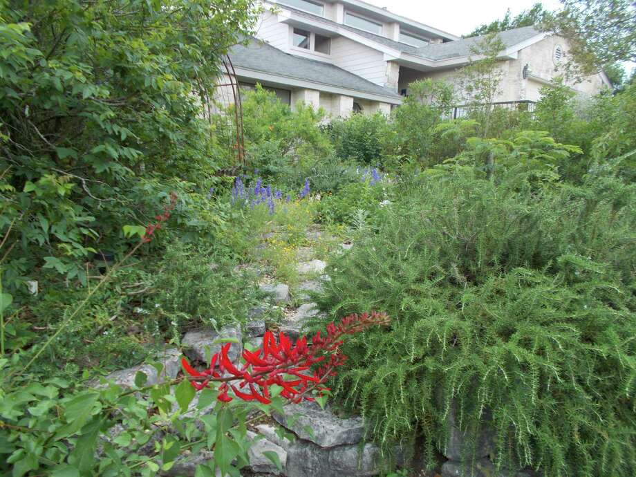 Drought-tolerant coral bean adds a splash of red in Sir Oliver Smith's landscape. Photo: Courtesy Sir Oliver Smith