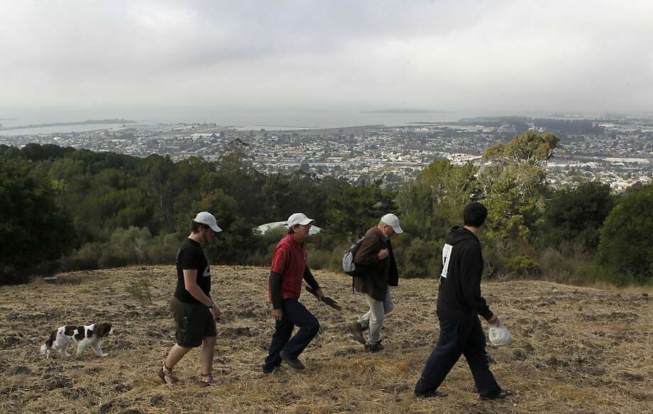Neighbors and preservationists walk through a meadow in newly acquired open space in El Cerrito on Wednesday. Photo: Paul Chinn, The Chronicle