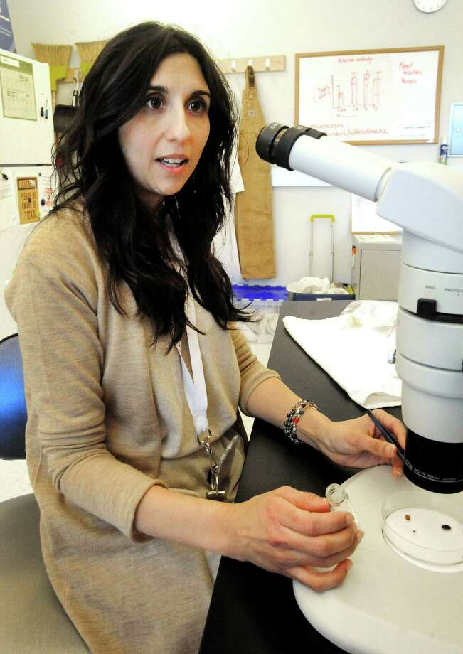 Assistant professor Neeta Connally works with blacklegged ticks in her lab at Western Connecticut State University in Danbury, Conn. in this file photo. Photo: Michael Duffy / The News-Times