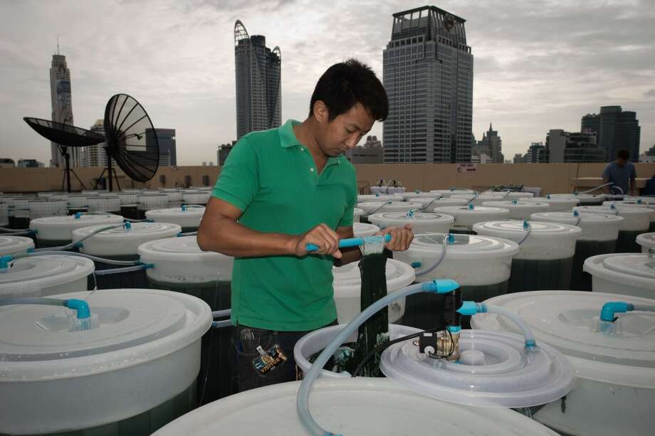 Thailand: A worker checking a spirulina farm on the top of a hotel in Bangkok.  On a hotel rooftop in Bangkok, dozens of barrels of green liquid bubble under the sun -- the latest innovation in urban farming. Proponents of the edible algae known as spirulina say it could help provide a sustainable source of protein as an alternative to meat. Photo: Nicolas Asfouri, AFP/Getty Images