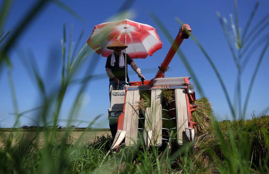 Japan: A farmer harvests rice with a Kubota Corp. combine harvester in a paddy field in Sakura, Chiba Prefecture, Japan. Japan is self-sufficient in rice as the government imposes high tariffs on imports. Photo: Tomohiro Ohsumi, Bloomberg
